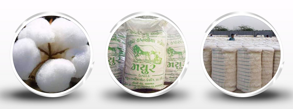 Cottonseed Cake Price Manufacturers